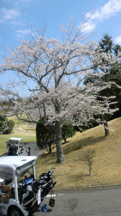 20120408sakura5-200w.jpg