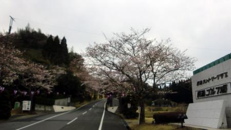 sakura-450.jpg