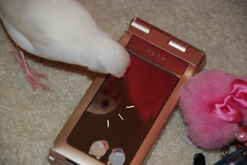 携帯とナナ