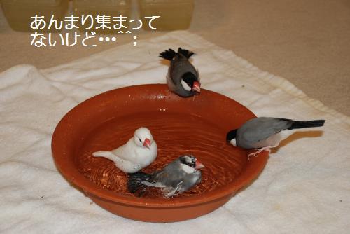 お風呂に集まる・・・
