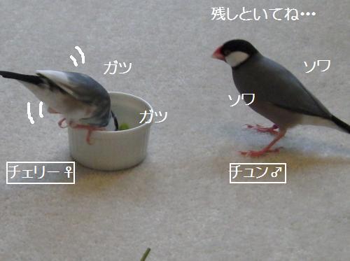 チェリー枝豆