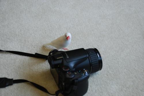 スタンバイ中のカメラとナナ