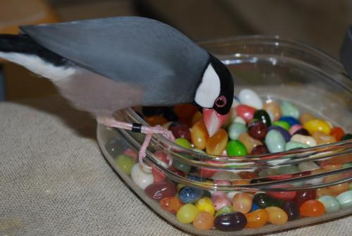 食べたい・・・