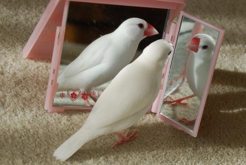 3羽のナナ