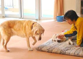 老犬ホーム1