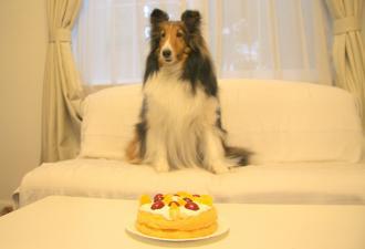 シェリー&ケーキ