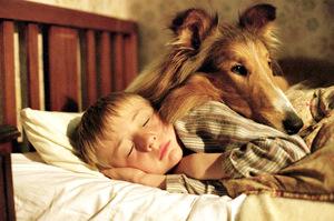 lassie02 (2)