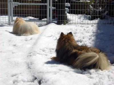 まさかの積雪⑤