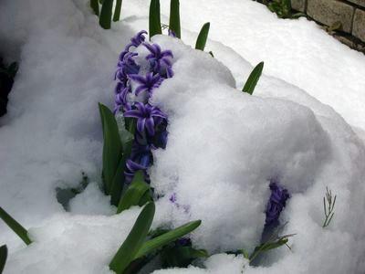 まさかの積雪②