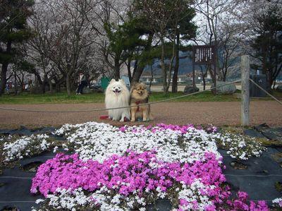 花とカルビ⑤