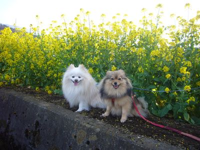 花とカルビ①