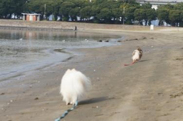 海で遊ぼう編⑤