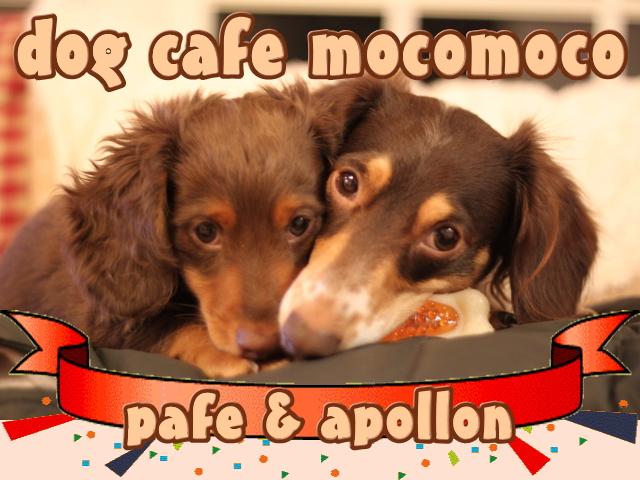 MOCOMOCO.jpg