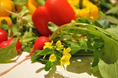 野菜レフ7