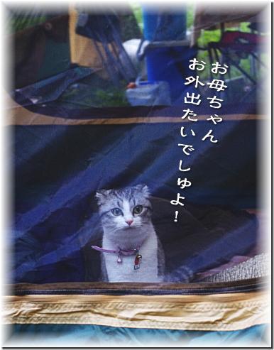 akita-may-5.jpg