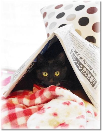 新聞テントは面白いにゃ