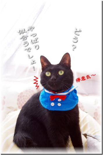 どう?猫モデルできるでしょ!