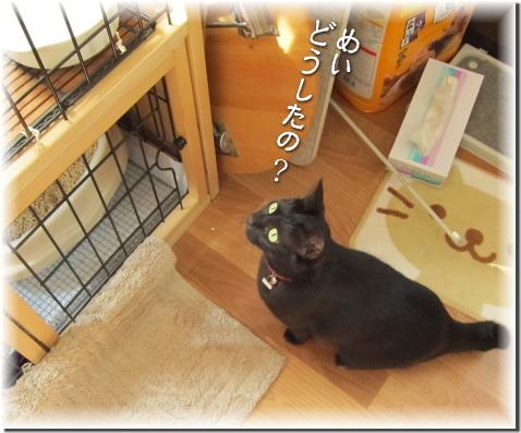 jiji2010-54-1.jpg