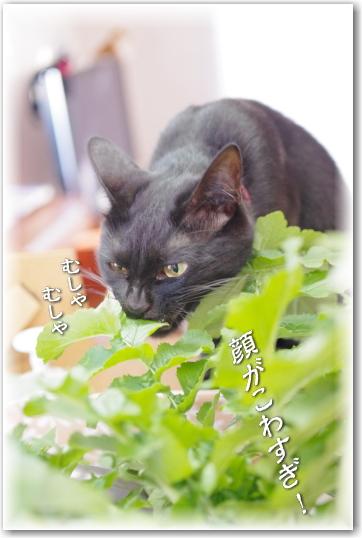 jiji2010-68-4.jpg
