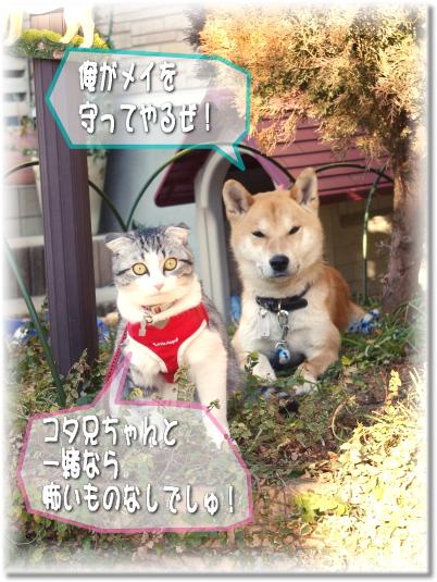 メイも番猫しましゅ!