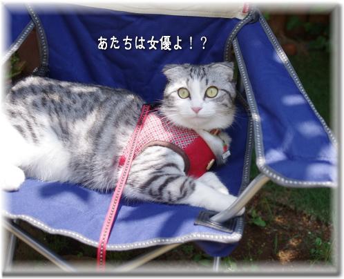 女優 メイ!