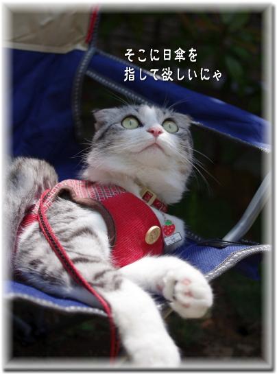 女優 メイ 日傘を所望する