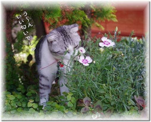 お花好きでしゅよ