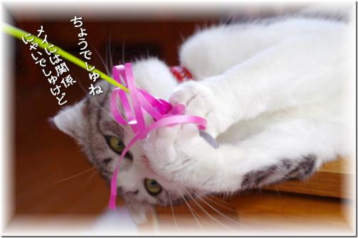 ピンクのちょうちょさんでしゅ