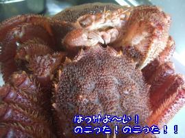DSCF3667_convert_20110816223438.jpg