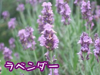 DSCF4336_convert_20110718213911.jpg