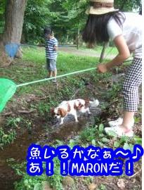 DSCF4474_convert_20110802153706.jpg