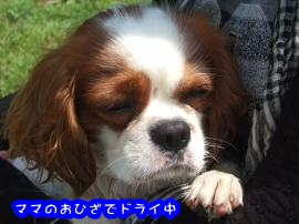 DSCF4623_convert_20110802154714.jpg