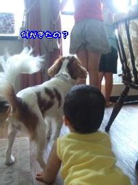 DSCF4811_convert_20110816094720.jpg