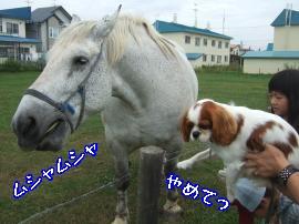 DSCF5046_convert_20110819155812.jpg