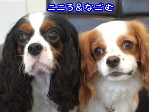 DSCF5388_convert_20110828090822.jpg