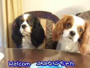 DSCF5409_convert_20110828091226.jpg