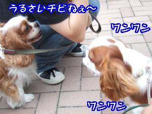 DSCF5448_convert_20110828091723.jpg