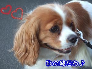 DSCF5480_convert_20110905134407.jpg