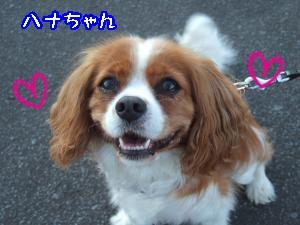 DSCF5499_convert_20110905142027.jpg