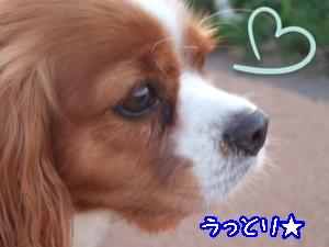 DSCF5546_convert_20110905134844.jpg