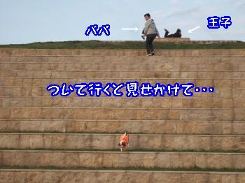 DSCF5845_convert_20111104163430.jpg