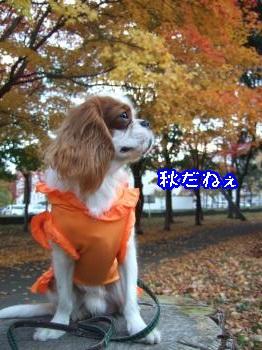 DSCF5911_convert_20111104164056.jpg