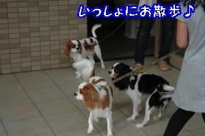 DSC_0036_convert_20110915165159.jpg
