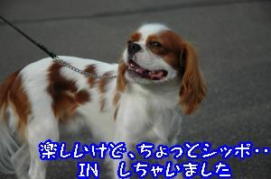 DSC_0058_convert_20110915165829.jpg