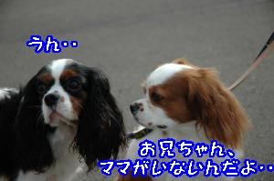 DSC_0067_convert_20110916225210.jpg