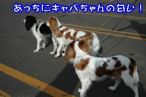 DSC_0078_convert_20110915170319.jpg