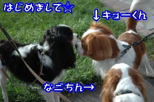 DSC_0082_convert_20110915170451.jpg