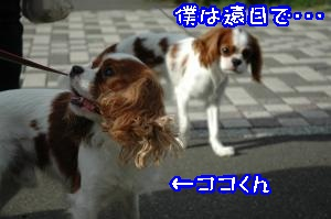 DSC_0089_convert_20110915170652.jpg