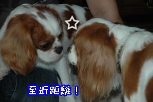 DSC_0112_convert_20110915170939.jpg