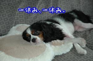 DSC_0114_convert_20110915171053.jpg